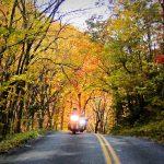 Autumn Riding Season Boot Choices